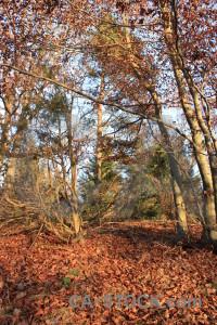 Leaf red tree orange forest.