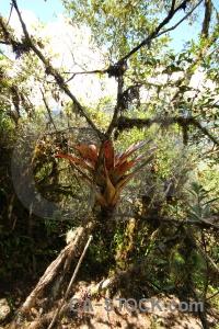 Leaf south america flower altitude inca trail.