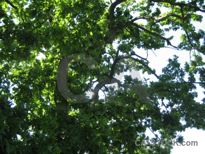 Leaf tree branch white green.