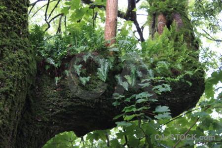 Leaf tree fern branch plant.