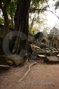 Lichen buddhism asia stone ta prohm.