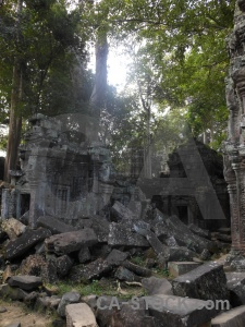 Lichen cambodia ta prohm tree buddhism.