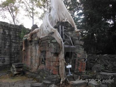 Lichen fungus cambodia siem reap temple.