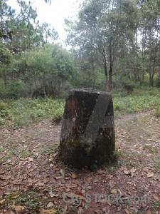Lichen leaf laos stone jar.
