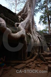 Lichen person southeast asia buddhism tree.