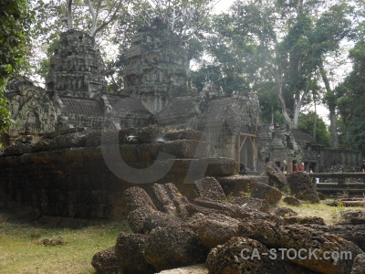 Lichen siem reap tomb raider tree asia.