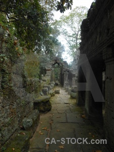 Lichen temple angkor plant khmer.