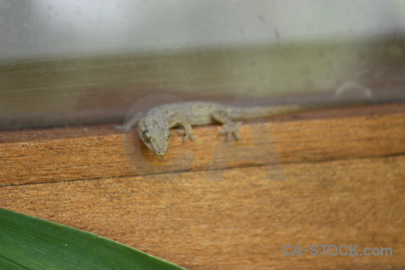 Lizard gecko green animal reptile.