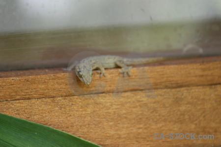 Lizard gecko green animal reptile.