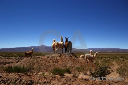 Llama salta tour sky mound altitude.