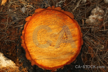 Log circle texture javea wood.
