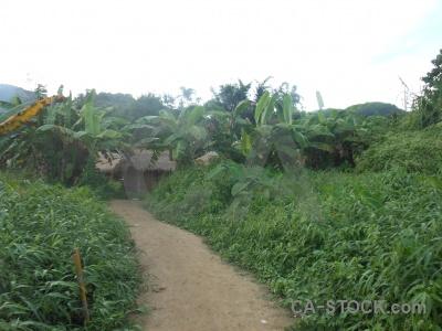 Long neck karen tree southeast asia village thailand.