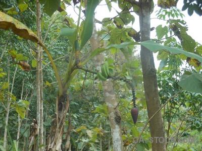 Luang prabang southeast asia trek banana laos.