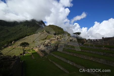 Machu picchu tree grass stone andes.