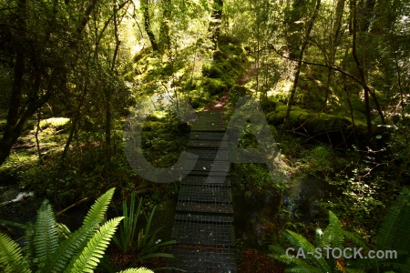 Manapouri pearl harbour circle trek forest moss south island.