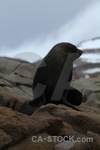 Marguerite bay antarctica cruise fur seal animal sky.