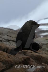 Marguerite bay antarctica cruise fur seal animal sky.