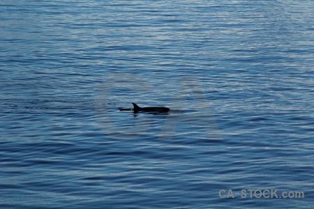 Marguerite bay antarctica cruise water orca.
