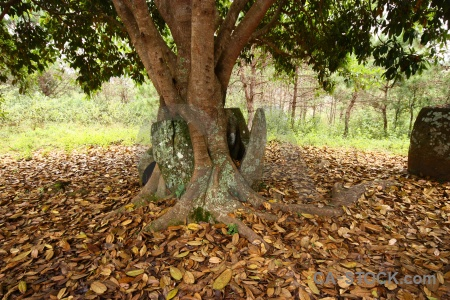 Megalithic southeast asia leaf phonsavan lichen.