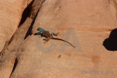 Middle east rock unesco lizard asia.