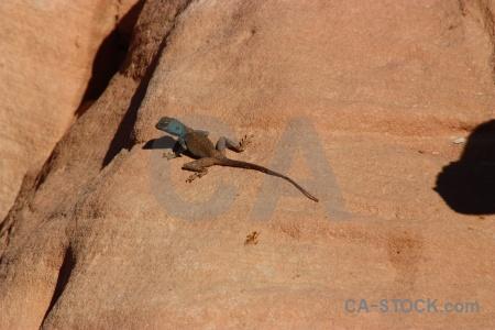 Middle east rock unesco lizard asia.
