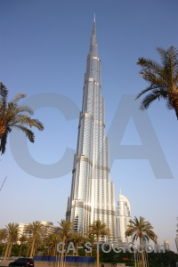 Middle east tree burj khalifa palm western asia.