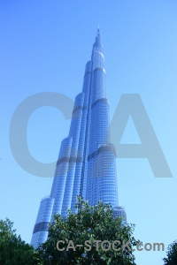 Middle east uae burj khalifa western asia tree.