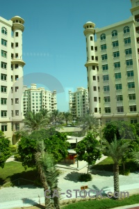 Middle east western asia grass tree uae.