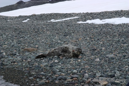 Millerand island antarctica cruise animal rock ice.