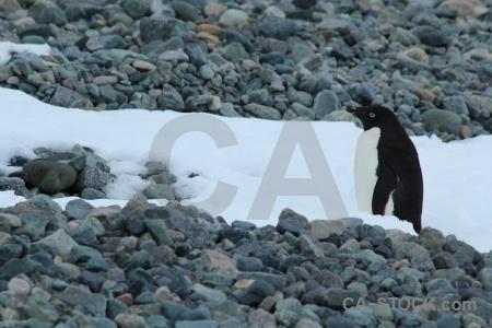 Millerand island antarctica cruise stone snow animal.