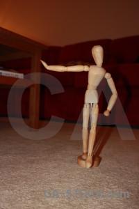 Model anatomy.