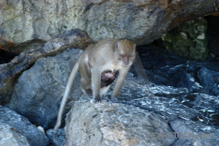 Monkey beach baby asia yong kasem bay southeast.