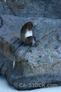 Monkey beach thailand asia southeast rock.