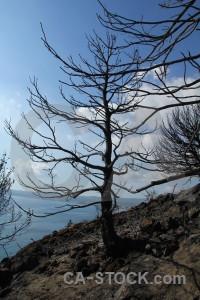 Montgo fire branch europe spain tree.