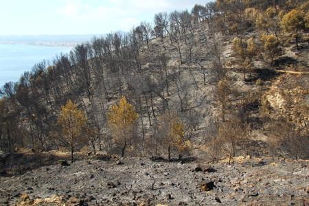 Montgo fire europe burnt tree javea.