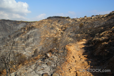 Montgo fire spain javea burnt tree.