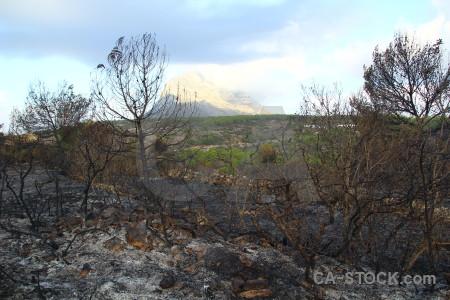 Montgo fire tree javea spain burnt.