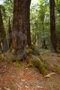 Moss forest south island trek plant.