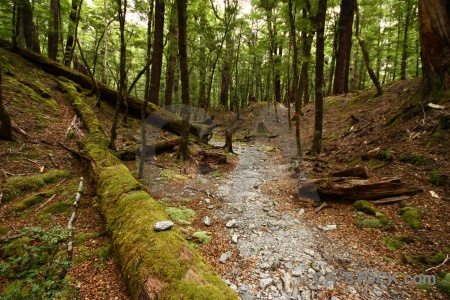 Moss log lake sylvan trek south island plant.