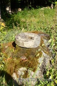 Moss plant rock object green.