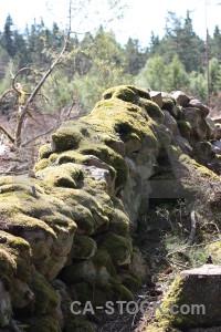 Moss stone rock wall plant.