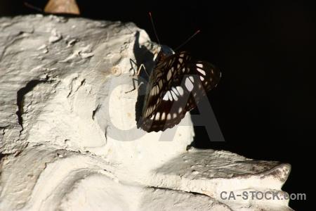 Moth stone siem reap kbal spean southeast asia.