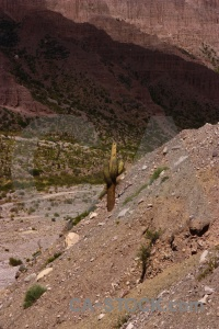 Mountain cactus andes plant valley.
