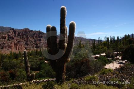 Mountain unesco quebrada de humahuaca cactus sky.