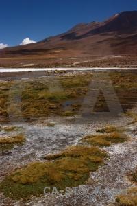 Mountain water grass altitude bolivia.
