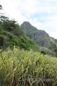 Mountain white green landscape.
