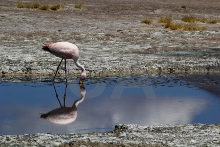 Mud salt lake altitude flamingo laguna hedionda.