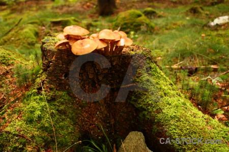 Mushroom fungus green brown orange.