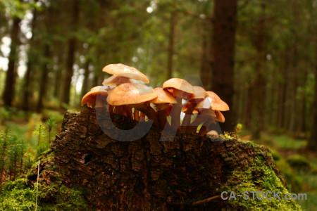 Mushroom fungus toadstool.