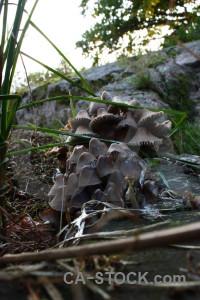 Mushroom fungus white toadstool green.